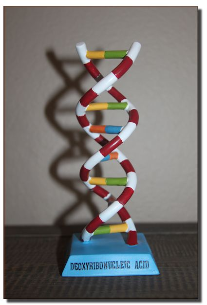 DNA Bobblehead