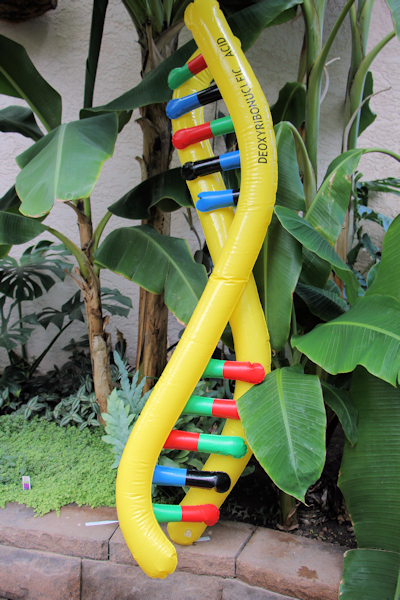 DNA Inflatable